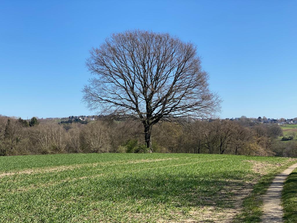 Baum auf einem Feld - Videoleben
