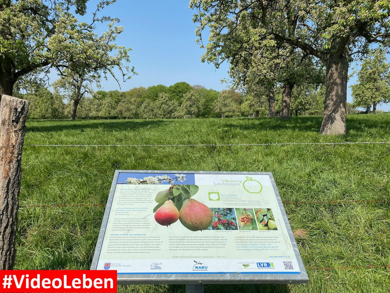 Obsthinweisschild Obstweg Obstwanderweg 4 Familienwanderweg Leichlingen Leichlinger Obstweg - Videoleben
