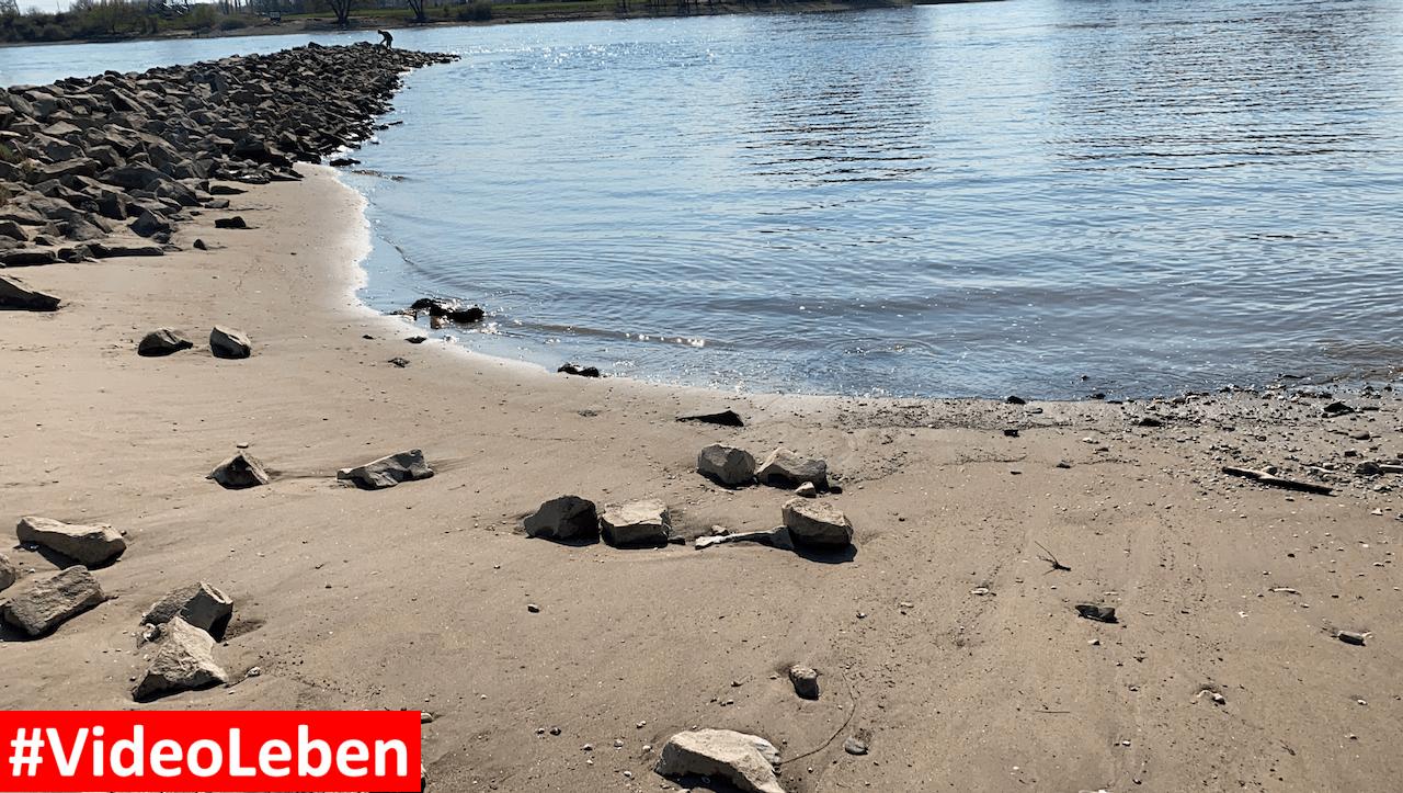 Sandstrand am Rhein bei der Wuppermündung - Videoleben