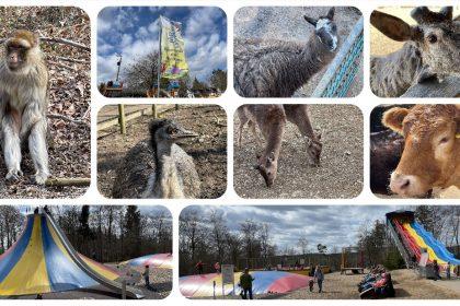 Wild- und Erlebnispark Daun - Videoleben