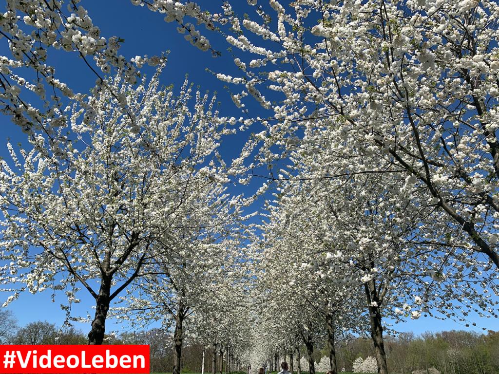 Blütenpracht oberhalb des Witthausbusch in Mülheim an der Ruhr - Videoleben - Ausflugsziele trotz Corona