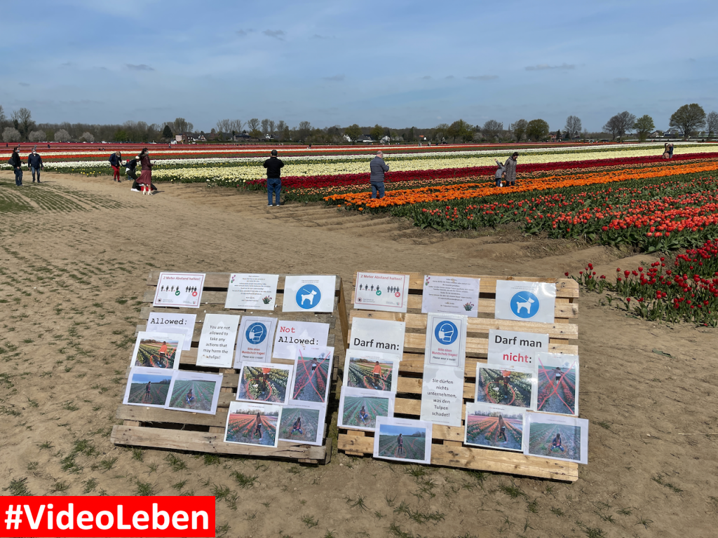 Tulpenfeld Grevenbroich 2021 - Ausflugstipps trotz Corona Lockdown und Notbremse mit Maskenpflicht #VideoLeben