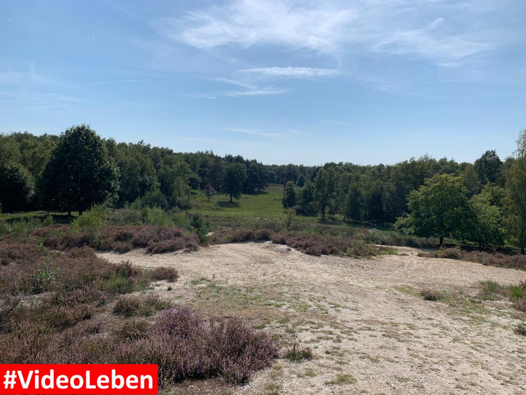 Wahner Heide vor den Toren von Köln und Bonn rund um den Köln-Bonner Flughafen - Ausflugstipp trotz Corona - #Videoleben