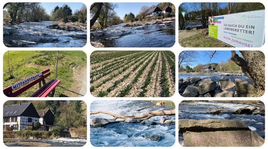 Wipperkotten an der Wupper - Leichlingen Leysiefen und Tulpen selbst scheiden in Leichlingen - Videoleben - Ausflugstipps bei Corona