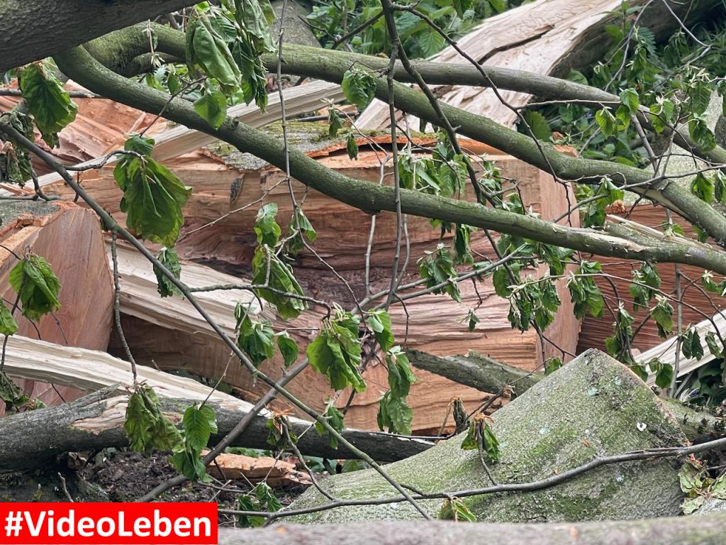 Fast vom Baum erschlagen - Buscher Feld in Solingen #Videoleben